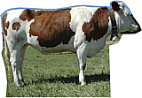 Cow Side Cardboard Cutout Standup Prop